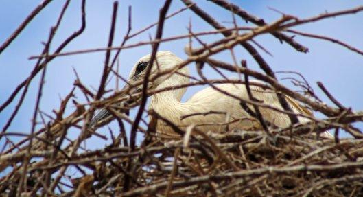 160615 storks (2)