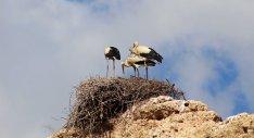 160615 storks (7)