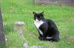 160619 welsh cats (1)