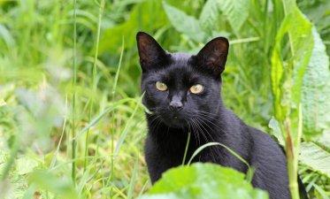 160619 welsh cats (11)