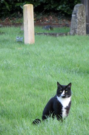 160619 welsh cats (5)