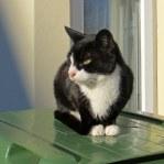 160619 welsh cats (7)