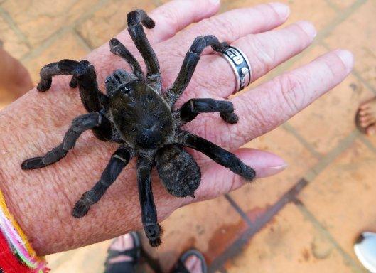 160622 spiderwoman (2)