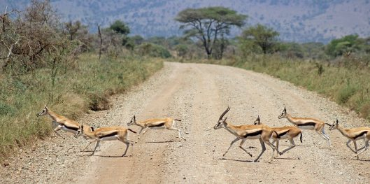 160713 antelopes (7)