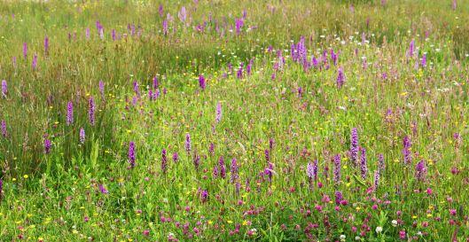 160715 orchids (1)