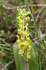 160715 orchids (3)