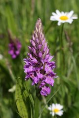 160715 orchids (5)