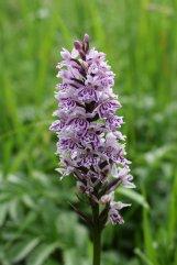 160715 orchids (6)
