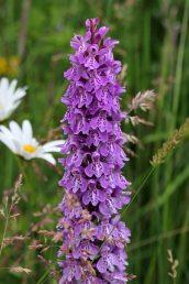 160715 orchids (8)