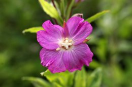 160722 flowers (11)