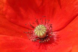 160722 flowers (4)