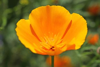 160722 flowers (5)