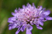 160722 flowers (7)