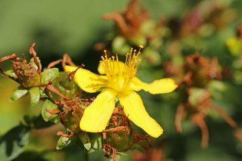 160722 flowers (8)