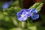 160722 flowers (9)
