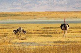 160727 ostrich (4)