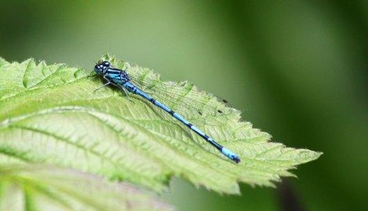 azure male (1)