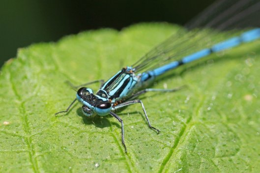 azure male (2)