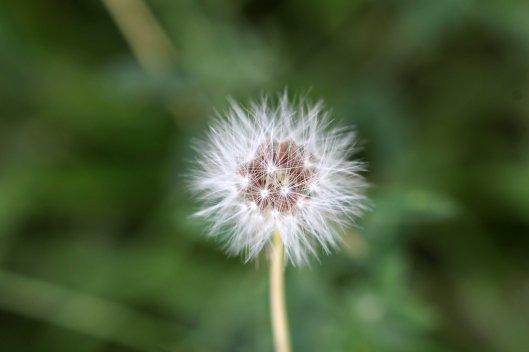 160808 seeds (1)