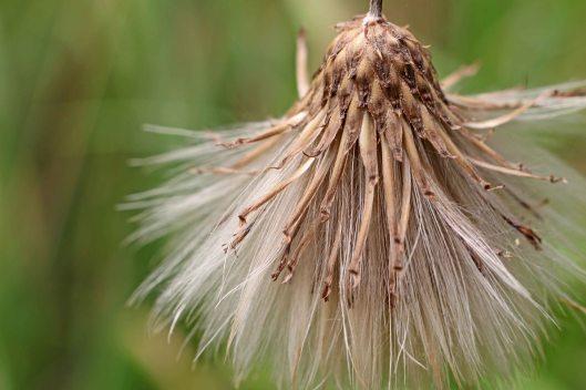 160808 seeds (2)