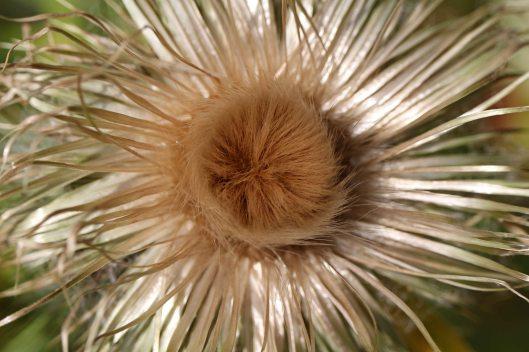 160808 seeds (4)