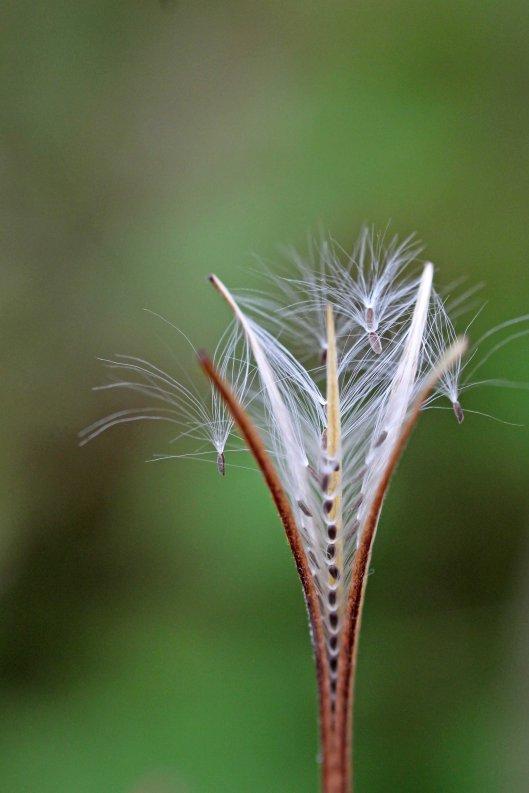 160808 seeds (5)