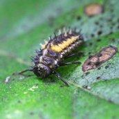 160809 ladybird (4)