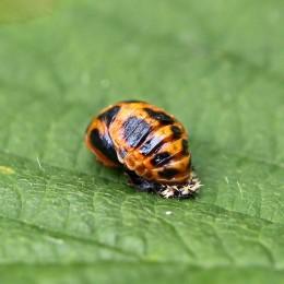 160809 ladybird (7)