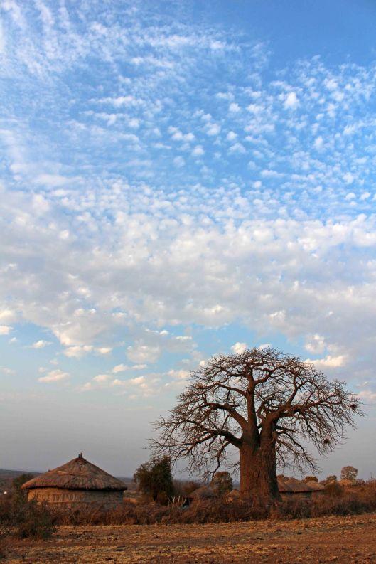 160831 baobab (1)