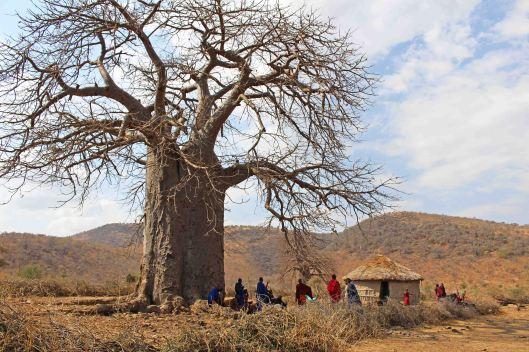 160831 baobab (3)