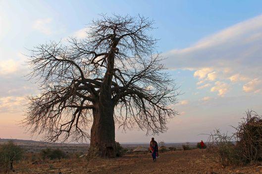 160831 baobab (5)