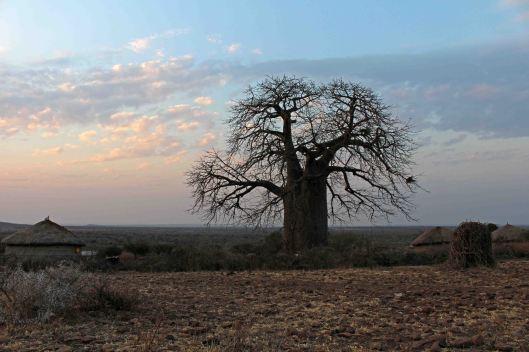 160831 baobab (6)