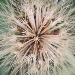 160908-seeds-1