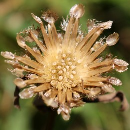 160908-seeds-4