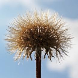 160908-seeds-5
