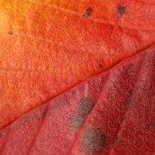 160912-autumn-leaves-2
