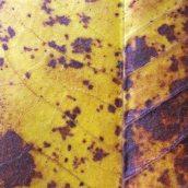 160912-autumn-leaves-4