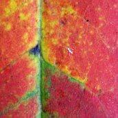 160912-autumn-leaves-6