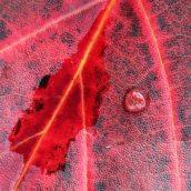 160912-autumn-leaves-7