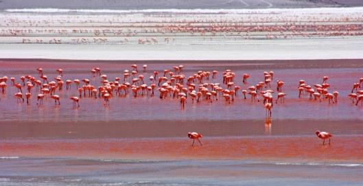 160914-flamingos-3