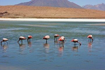 160914-flamingos-4