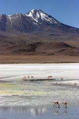 160914-flamingos-5