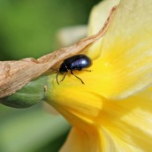 160920-unknown-1