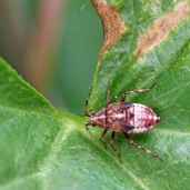 160920-unknown-2