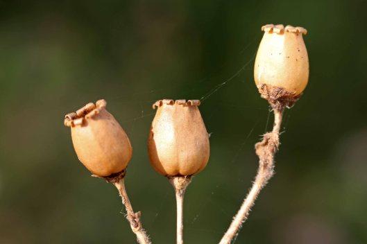 161002-seeds-2
