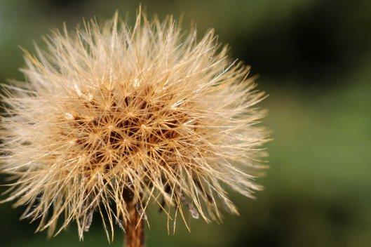 161002-seeds-6
