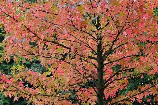 161013-autumn
