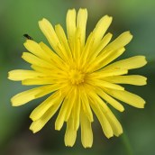 161014-mellow-yellow-1