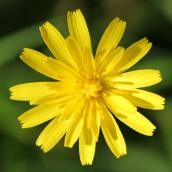 161014-mellow-yellow-3