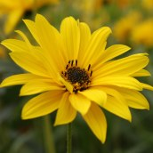 161014-mellow-yellow-4